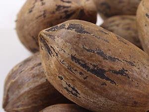 Organic Pecans (Raw, In Shell)