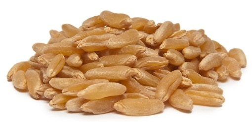 organic kamut grains cooking baking nuts com