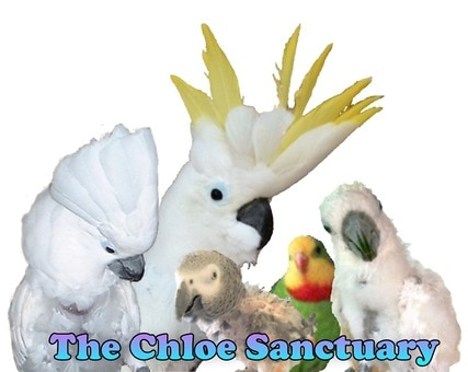 Nuts for The Chloe Sanctuary