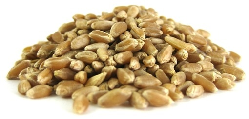 Organic Hard Spring Wheat Berries