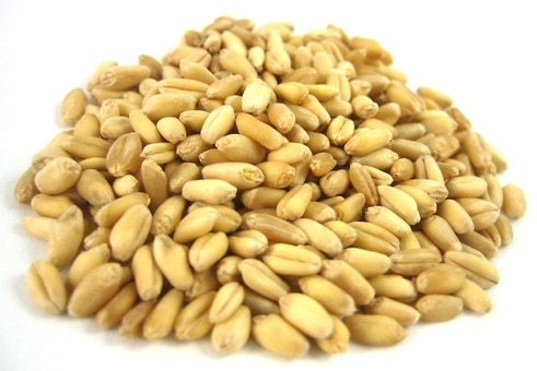 Organic Soft White Spring Wheat Berries
