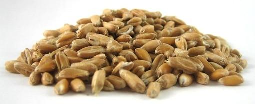 organic spelt grains cooking baking nuts com