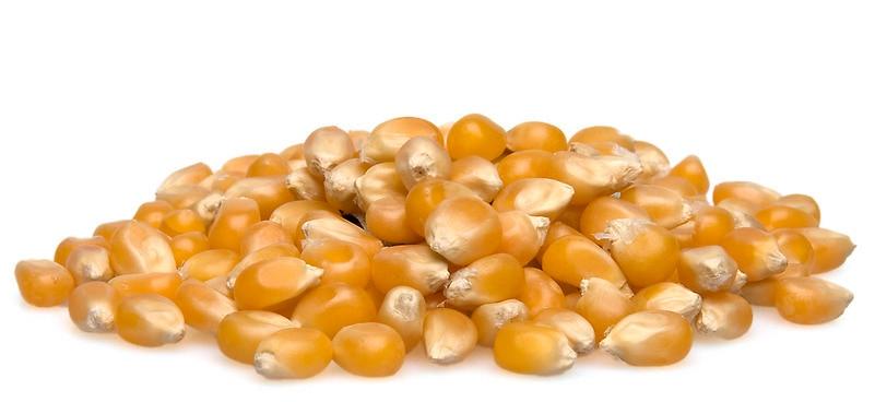Unpopped Popcorn Kernel Clipart Organic Popcorn...